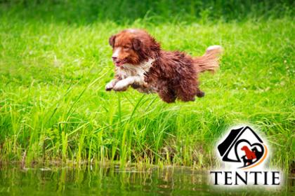 Hund seinen Freilauf in vollen Zügen genießen