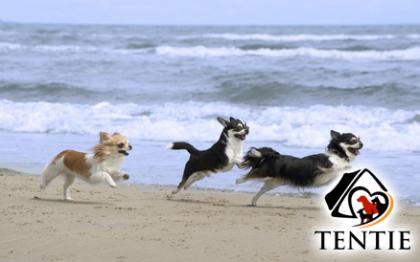 Tentie - © cynoclub - Fotolia.com - dog beach