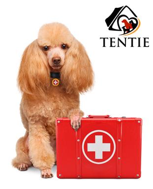 Hunde Gesundheit