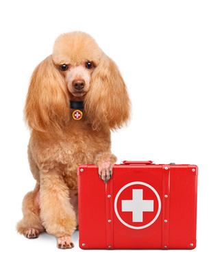 tentie.de - Ultraschalluntersuchung beim Hund