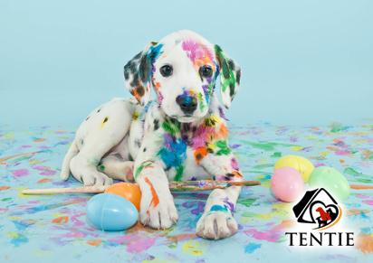 tentie.de - lustige Hundebücher