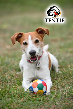 Tentie