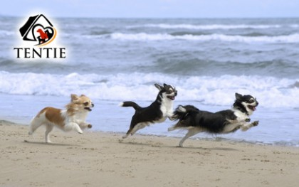 tentie.de - Irrtümer über Hunde