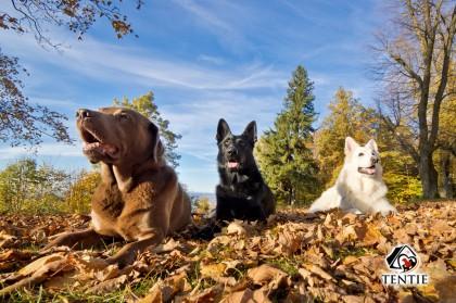 tentie.de - Wanderhunde