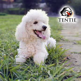 tentie.de - was es über reinrassige Hunde zu wissen gibt