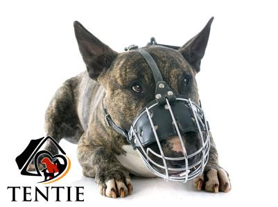 Agressive Hunde?